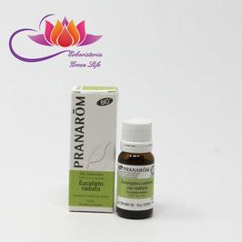 Eucalipto Radiata Olio Essenziale Bio