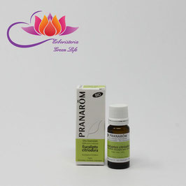 Eucalipto Citriodora Olio Essenziale BIO