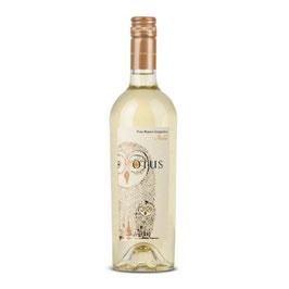 Asio Otus Vino Bianco amabile