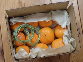 無農薬たきさんちの渋柿2.5kg