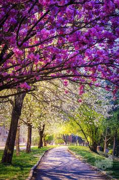 22 - Primavera sul lungo Po