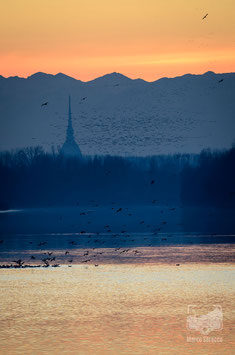 12 - Il Po e la Mole Antonelliana al tramonto