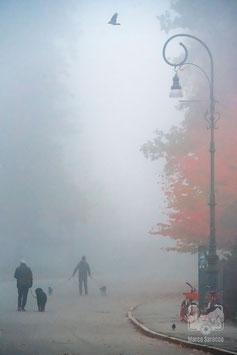 21 - La nebbia del primo mattino