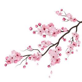 Ast Kirschblüte