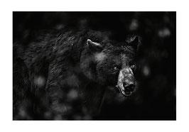 CP PDA 2018 - Animalier - Alain Ernoult