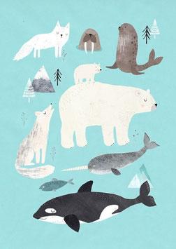 Poster Tiere aus dem Eis (50x70cm)