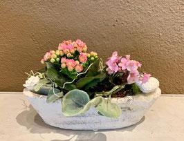 Gefäss bepflanzt für innen rosa