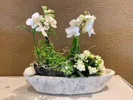 Gefäss bepflanzt für innen mit Orchidee weiss