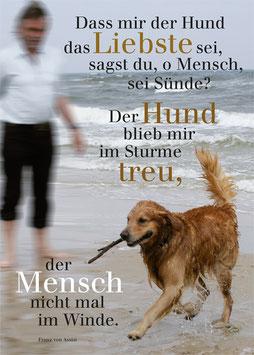 Hund im Sturm (A)