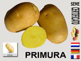 Primura