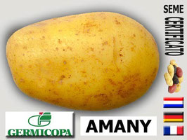 Amany 35/50