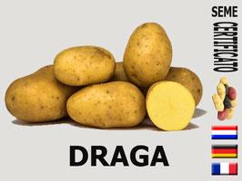 Draga 45/55