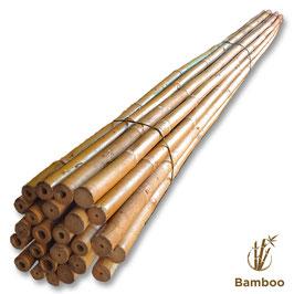Canna Bamboo per orto cm. 210 x 25 pezzi