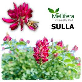 Mellifera SULLA in seme Kg.20
