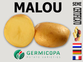 Malou Germicopa early