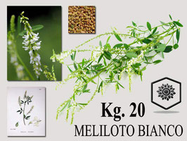Meliloto officinale Bianco ( melilotus officinalis) Kg. 20