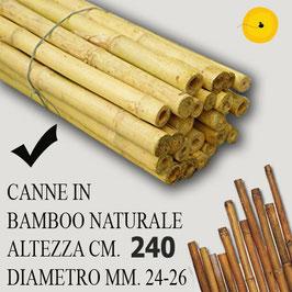 Canna Bamboo per orto cm. 240 x 25 pezzi