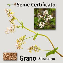 Grano Saraceno in seme kg.1