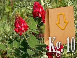 Mellifera SULLA in seme Kg.10