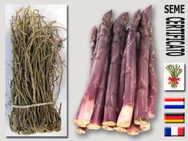 Asparago rosso ligure extra | 10 zampe