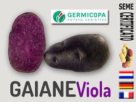 GAIANE (viola) calibro 40/45