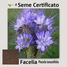 Facelia (Phacelia Tanacetifolia) kg.1