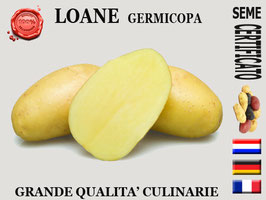 Loane Germicopa Yellow