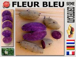 FLEUR BLEU (Viola)