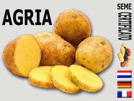 Agria calibro 35/55