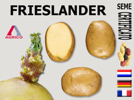 Frieslander 35/55