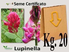 LUPINELLA in seme kg.20