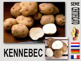 Kennebec (pasta bianca)