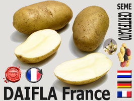 DAIFLA SuperPotatoes
