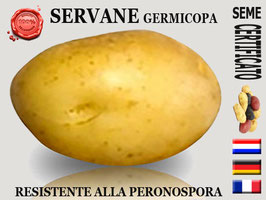 Servane Germicopa Yellow