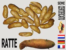 Ratte (patata del burro)