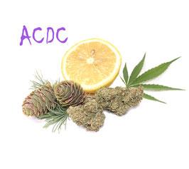 ACDC CBD Indoor Blüten