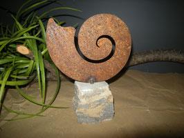 Muschel auf Stein