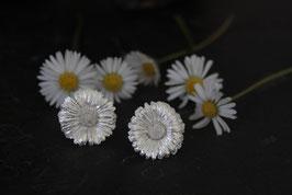 Gänseblümchen Ohrstecker