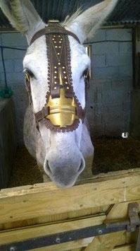 Cabestre âne, mule