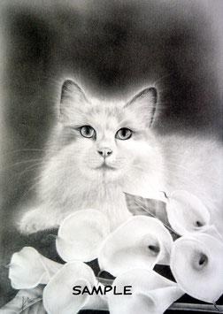 「セーラちゃんの肖像」