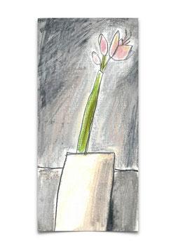 Amaryllis rosé