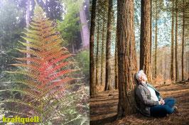 Waldbaden im Jahreskreis - 4-Jahreszeitenzyklus im Wald