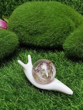zauberhafte Schnecken - klein