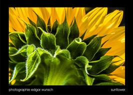 """sunflower"", 60x80cm"