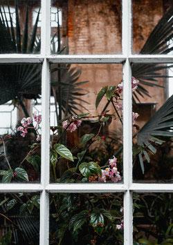 Green Window by Denny Phan