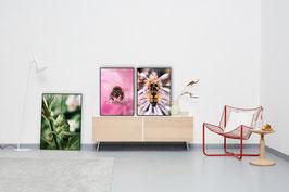 Insect-Bundle by Ole Bielfeldt