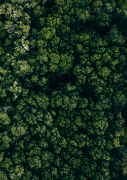 Happy Trees by Andrin Fretz