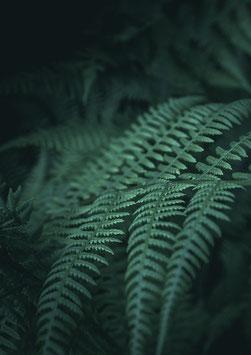 Dark Plant by Jonathan Nimmegeers