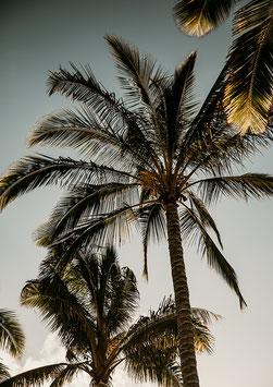 Palm On by Patrick Langwallner