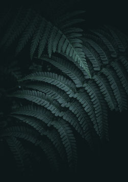 Wild Fern by Jonathan Nimmegeers